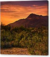 By The Light Of The Sunset Canvas Print