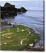 By The Shoreline Canvas Print