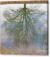 C And O Canal Tree Reflection Canvas Print
