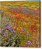 Ca Poppies And Goldfields And Lacy Phacelia And Sage In Antelope Valley Ca Poppy Reserve-california Canvas Print