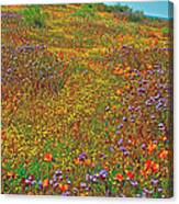 Ca Poppies And Goldfields And Lacy Phacelia In  Antelope Valley Ca Poppy Reserve-california  Canvas Print