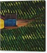 Cabbage Field Canvas Print