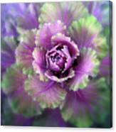 Cabbage Flower Canvas Print