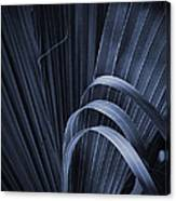 Cabbage Palm No. 3 Canvas Print