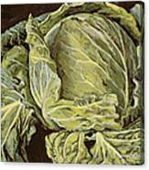 Cabbage Still Life Canvas Print