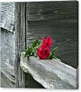 Cabin Rose Canvas Print