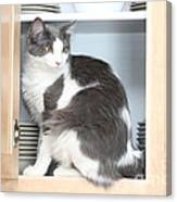 Cabinet Cat Canvas Print