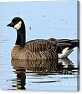Cackling Goose In Water Canvas Print