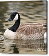 Cackling Goose Canvas Print