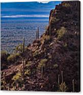 Cacti Covered Rock At Tucson Mountains Canvas Print