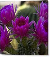 Cacti Flower Bouquet  Canvas Print