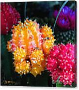 Cacti Watercolor Effect Canvas Print
