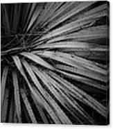 Cactus 5250 Canvas Print