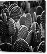 Cactus 5252 Canvas Print