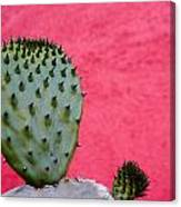 Cactus And Pink Wall Canvas Print