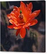 Cactus Blossom 1 Canvas Print