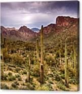 Cactus Canyon  Canvas Print