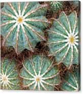 Cactus Family 2 Canvas Print