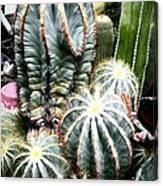 Cactus Family 3 Canvas Print