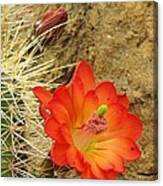 Cactus Flower Bright Canvas Print