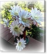 Cactus Flower Perfection Canvas Print