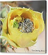 Cactus Flower With Ball Of Bees Canvas Print