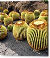 Cactus Garden On Lanzarote Canvas Print