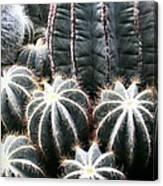 Cactus Glistening Canvas Print