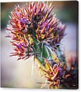 Cactus In Spring Bloom Canvas Print