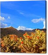 Cactus In Spring Canvas Print