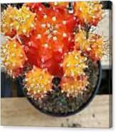 Cactus Orange Canvas Print