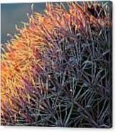 Cactus Rose Canvas Print