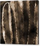 Cactus Sepia Tone Panama Canvas Print