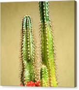 Cactus Towers Canvas Print