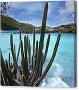 Cactus Trunk Bay  Virgin Islands Canvas Print