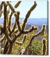 Cactus View Canvas Print