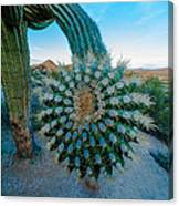 Cactus With A Twist Canvas Print