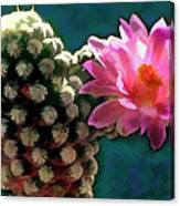 Cactus With Pink Sunlit Bloom Canvas Print
