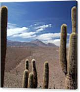 Cactus With The Andes Mountains Canvas Print