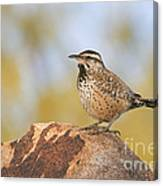 Cactus Wren On Rock Canvas Print