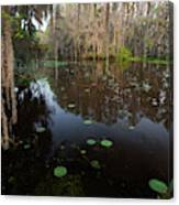 Caddo Lake, Texas's Largest Natural Lake Canvas Print