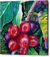 Cafe Costa Rica Canvas Print