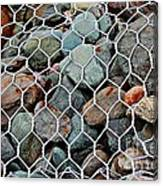 Caged By Barbara Griffin Canvas Print