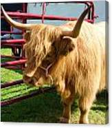 Caged Coo Canvas Print