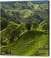 Caizan Hills Canvas Print