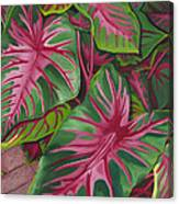 Caladiums Canvas Print