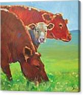 Calf And Cows Painting Canvas Print