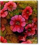 Calibrachoa Photoart I  Canvas Print