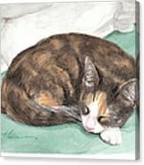 Calico Cat Sleeping Watercolor Portrait Canvas Print
