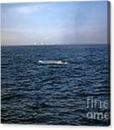 California Blue Whale Canvas Print